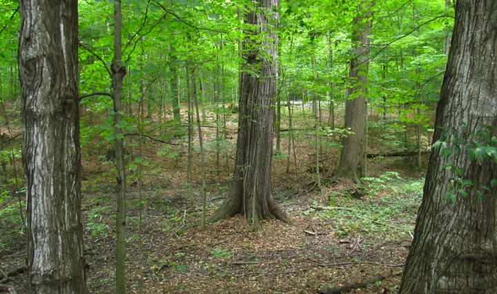 Sacred Grove near the childhood home of Joseph Smith Jr.
